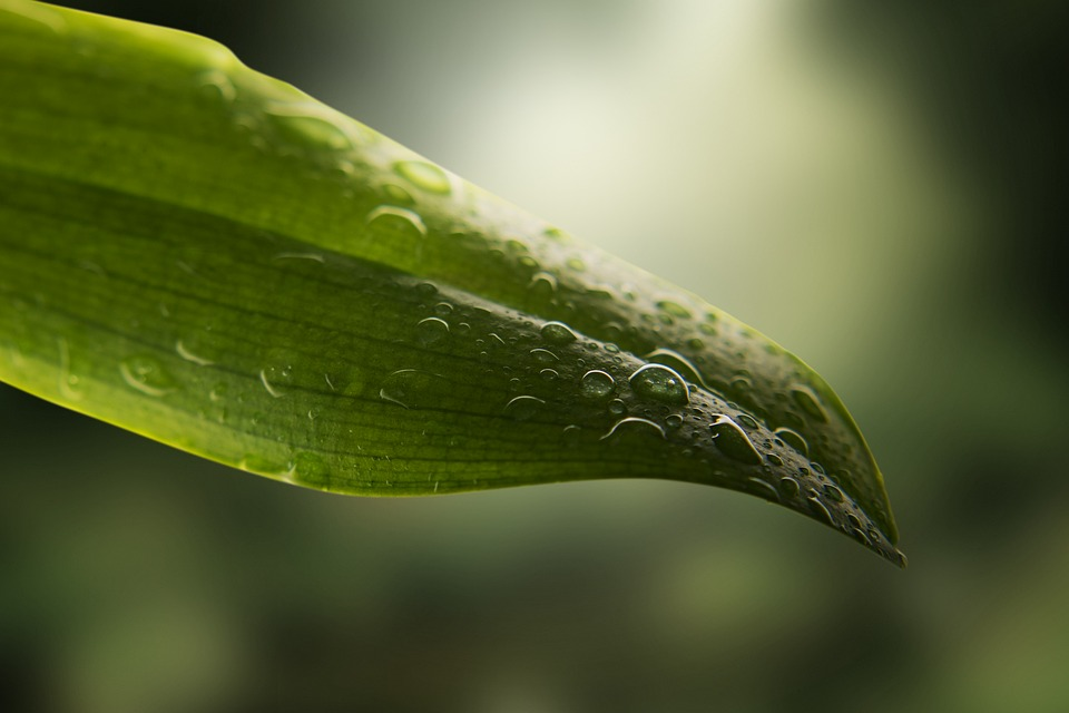kamerplant stoffen buitenzetten