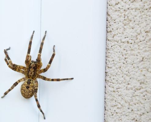 spin opzuigen kruipt hij uit je stofzuiger