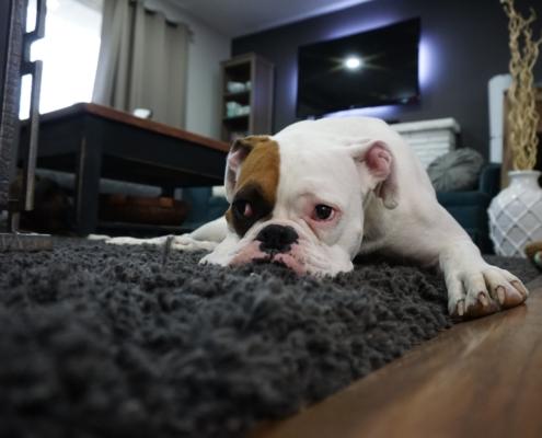 hoe vaak tapijt stofzuigen